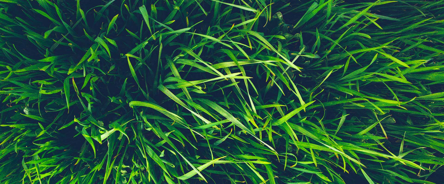 Choose the Right Grass for Your Property