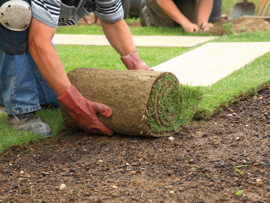 Reinvigorate Your Patchy, Brown Lawn